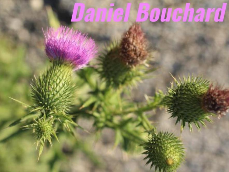 _Daniel Bouchard (1)
